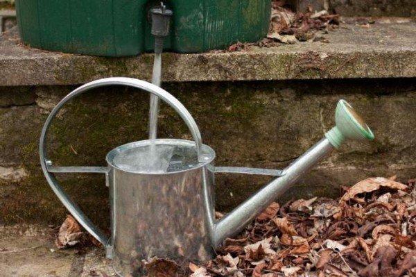 Поливать лук можно при помощи обычной лейки