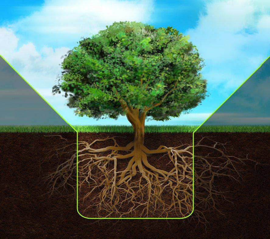 Корневая система дерева