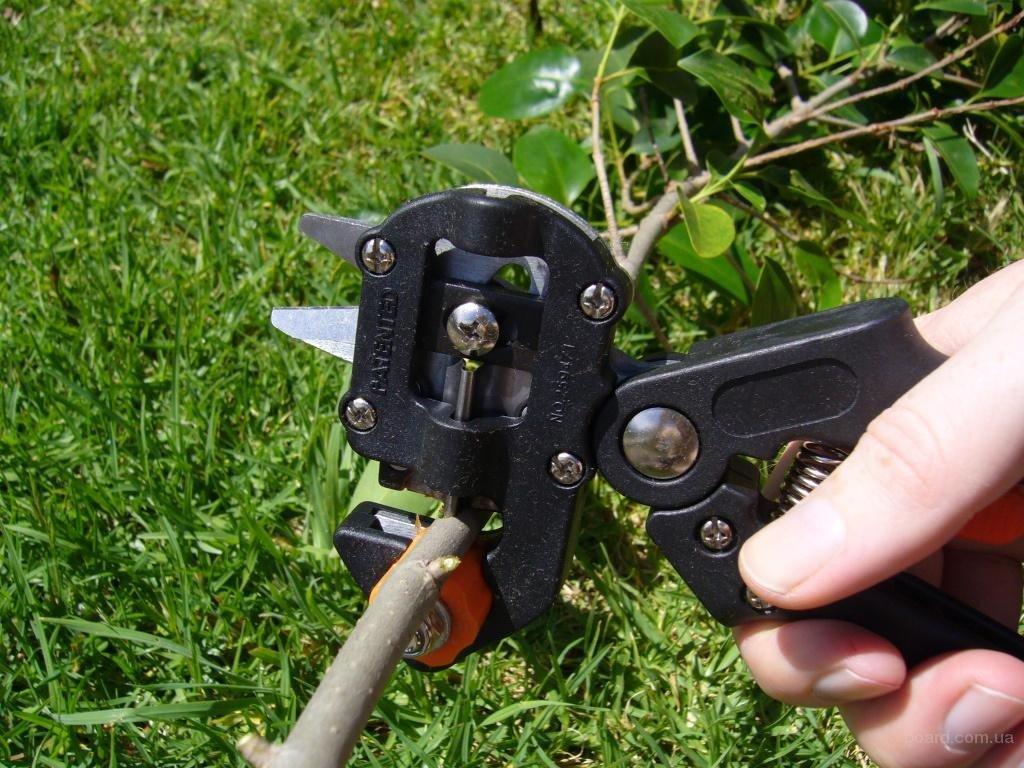 Как работать ручным садовым инструментом с виноградом