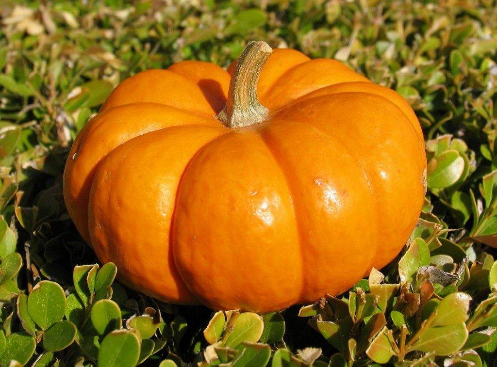 Огромная оранжевая тыква на снимке