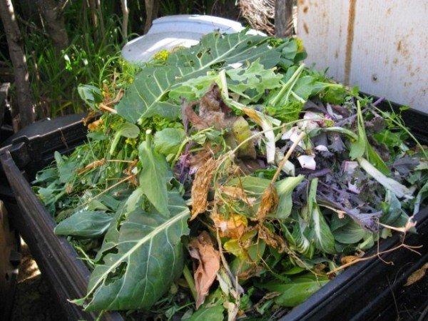 В состав компоста входят любые продукты переработки