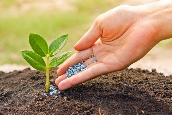 Использовать удобрение необходимо строго в тех дозах как указывает производитель