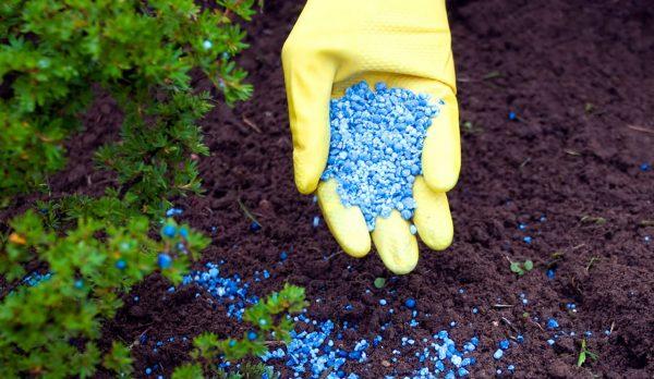 Азофоска благоприятно влияет на рост растений