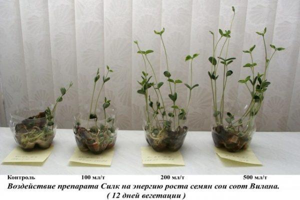 Как влияет препарат Силк на рост растения