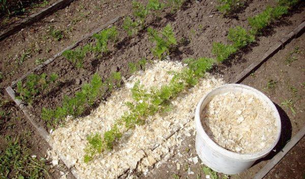 Опилки используются многими садоводами с целью удобрения почвы