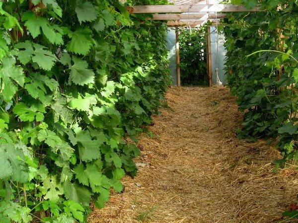 Опилками полезно удобрять почву в теплицах