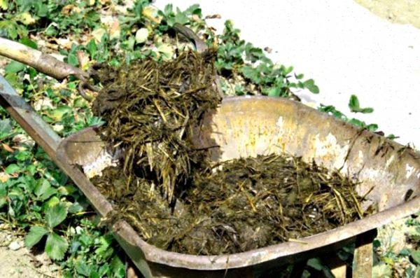 Удобрение на основе листьев крапивы