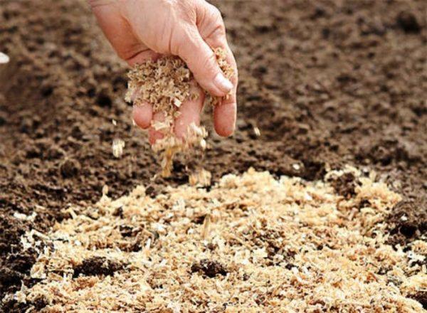 Удобрение почвы опилками эффективно и до посадки