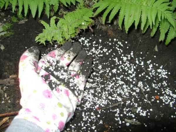 Применение калимагнезии для сада и цветов