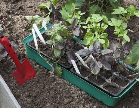 Специальные лоточки для размножения растений