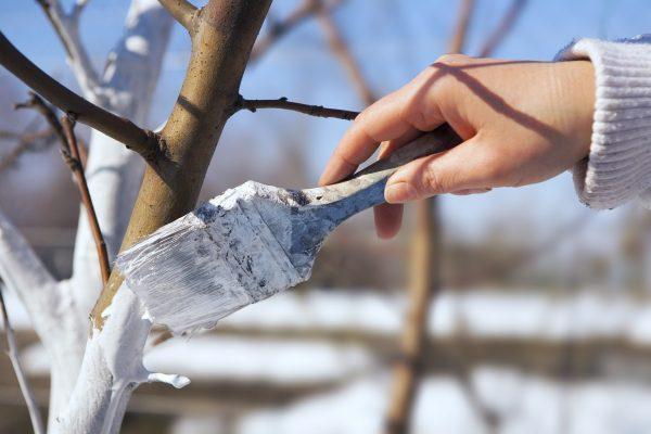При хорошем уходе и удобрении, деревья порадуют плодами