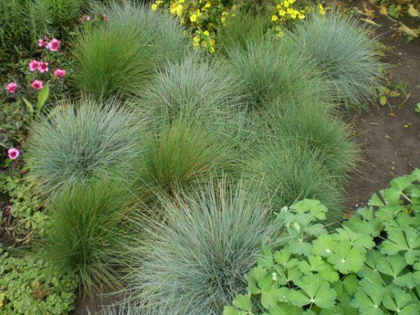 Декоративные типы трав часто используются для декорирования
