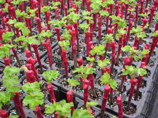 Выращивание растений требует времени и терпения