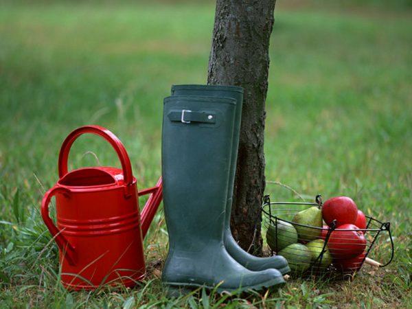 Для хорошего урожая необходимо не только удобрение, но и уход
