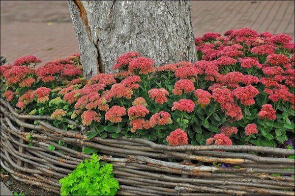 Для простых клумб лучше использовать неприхотливые растения