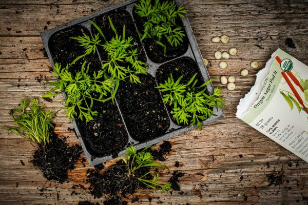 Оксидант ускоряет процесс обмена веществ у растений