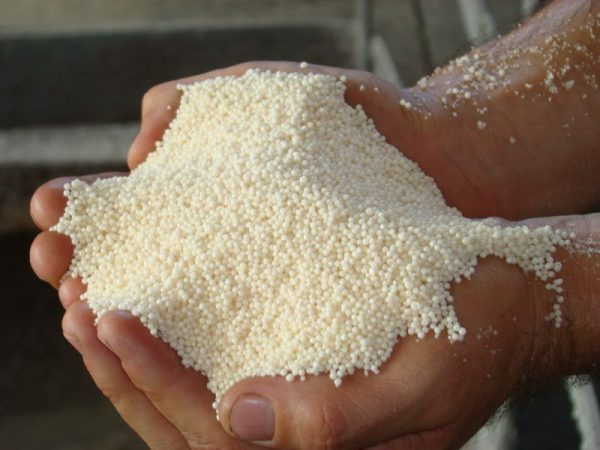 Селитра используется не только для удобрения растений