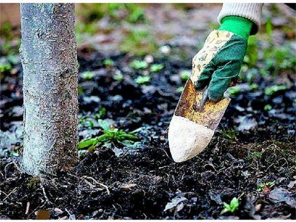 При правильном удобрении почвы плодотворность увеличится