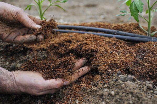 Перед посадкой растительных культур необходимо обработать землю удобрением Байкал