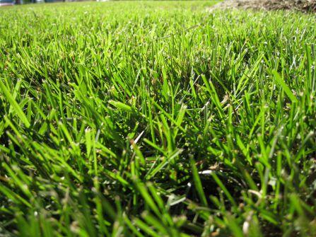 Газоны - неотъемлемая часть любого садового участка