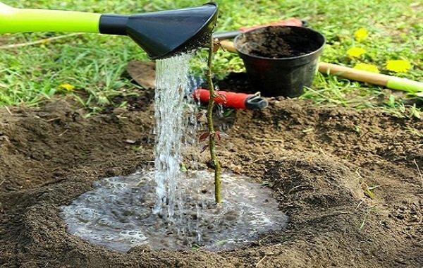 Садоводы рекомендуют подкармливать растения с момента посадки