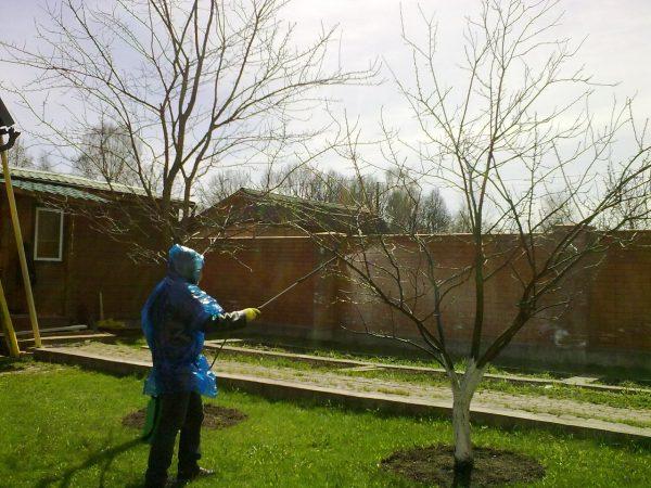 Брызгать деревья удобрениями - самый эффективный способ