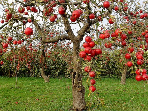 Осенью деревья необходимо подготовить к зиме