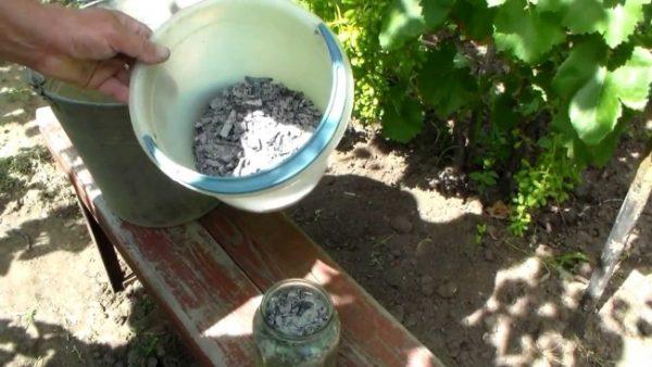 Садоводы рекомендуют удобрять кустарники чаще