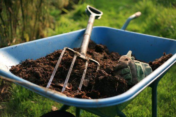 Можно добавлять помет непосредственно в почву