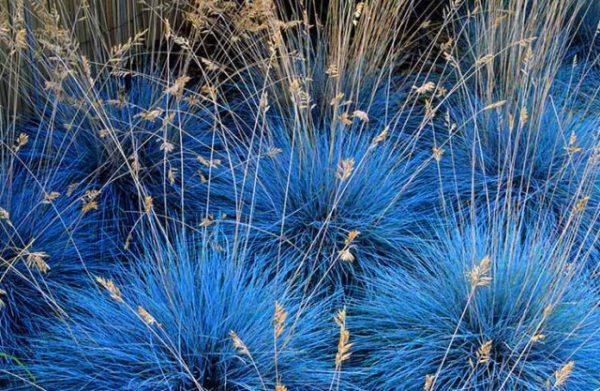 Трава для декорирования может быть не только зеленого цвета