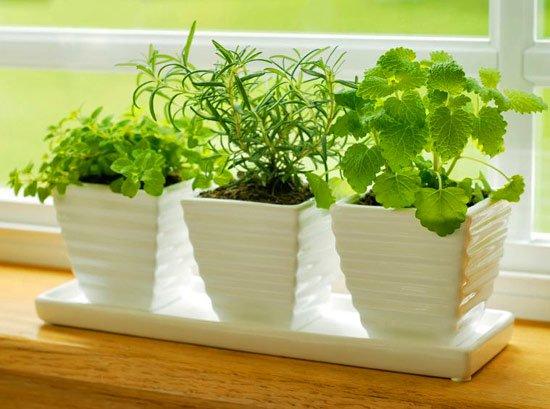 Мята смотрится достойно на равне с дорогими декоративными растениями