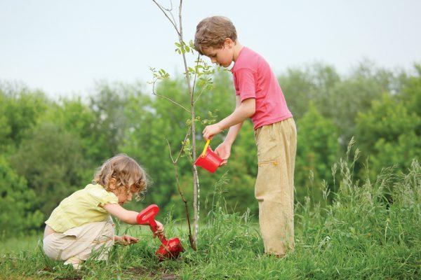 Подкармливать молодые деревья рекомендуется сразу после посадки
