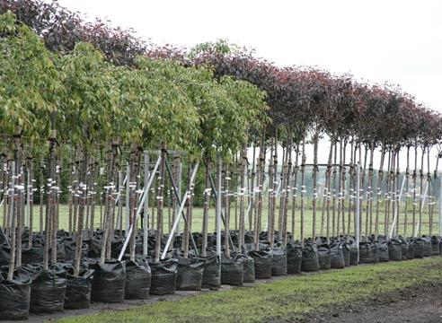 Удобрение необходимо не только плодовым растениям, но и декоративным