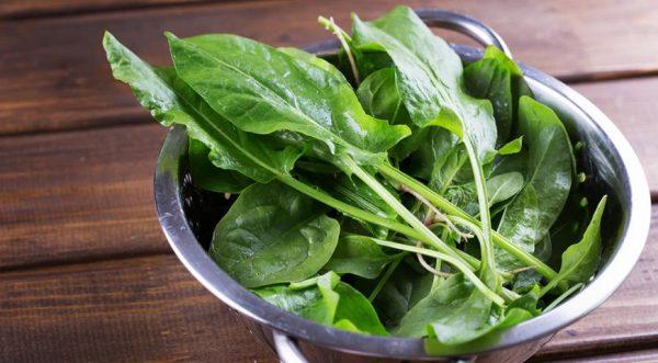 Щавель очень полезная зелень с приятными вкусовыми качествами