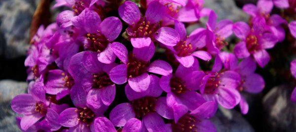 Яркие цветочки крупным планом