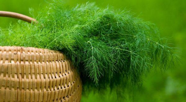 Есть два способа сохранения свежести зелени