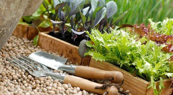Можно садить зелень не только в открытый грунт, но и в горшки