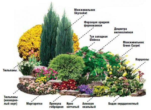 Как выглядит схема постоянного цветения