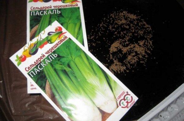 Сажать зелень из семян достаточно просто