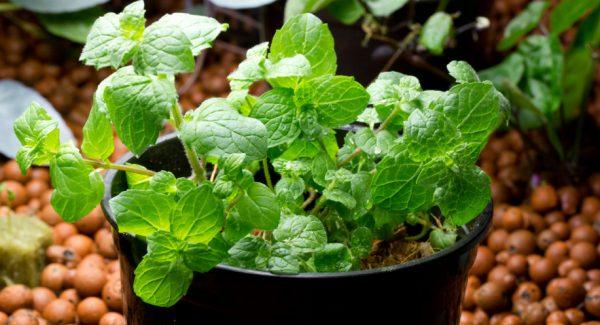 Качественные семена влияют на скорость роста растения