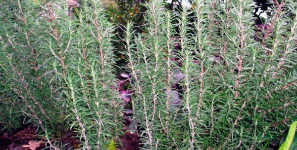 Как выглядит растение крупным планом