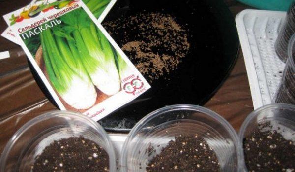 Лучше посадить зелень на рассаду, только потом садить в почву