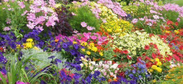 Обращайте внимание на цветовые окрасы