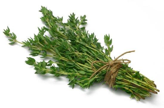 Как выглядит трава Тимьян крупным планом