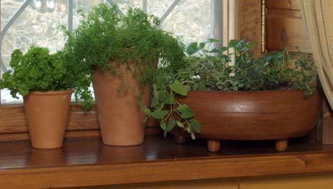 Дома можно растить и другие сорта зелени