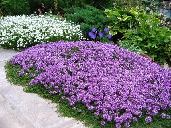 Стелющиеся многолетники - лучшее решение для создания яркого уголка в саду