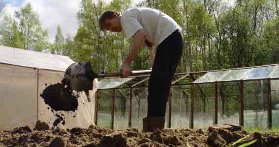 При подкормке почвы фекалиями, рекомендуется их хранить в одной куче, отдельно от растений и дома
