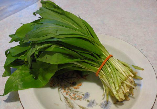Листья растения широко используются в народной медицине