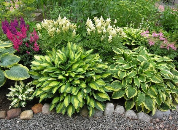 Теневыносливые растения не дают длительного роскошного цветения