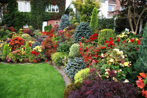 Многолетние цветы кустами и цветущие кустарники